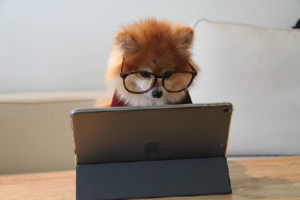 A little dog wearing glasses working on a laptop